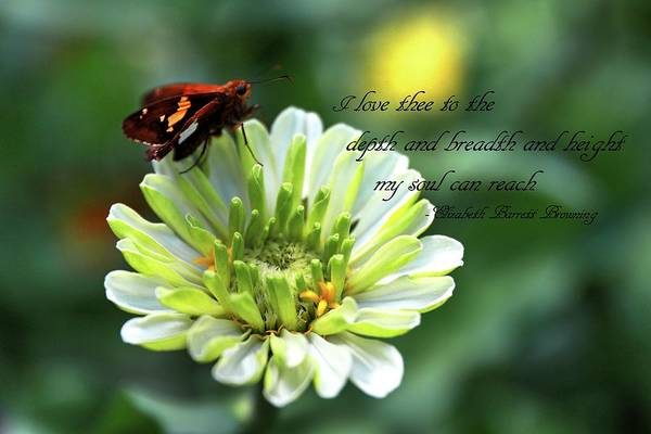 Photograph - A Zinnia, A Skipper And A Quote by Carol Montoya