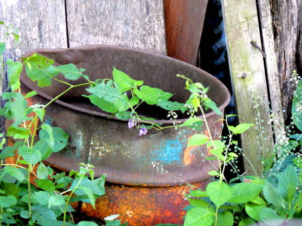 Photograph - Theda Barrel Rusts by Wild Thing