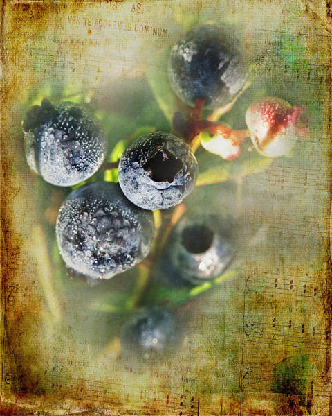 Blueberry Photograph - Them Old Blueberry Blues by Susan Capuano