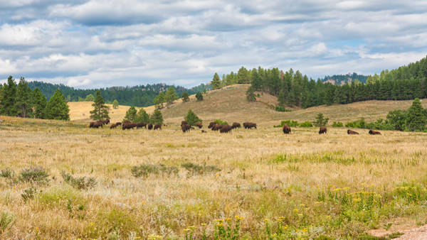 Photograph - There Be Buffalo Here by John M Bailey