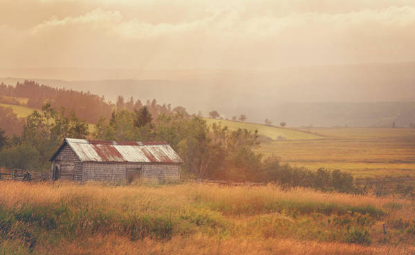 Photograph - There's A Bright Golden Haze On The Meadow by Tracy Munson