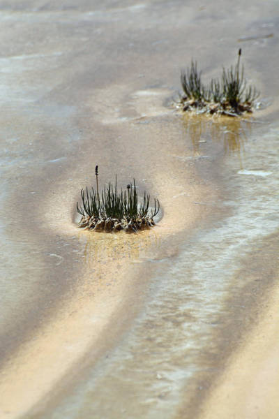 Photograph - Thermal Grass Island by Bruce Gourley