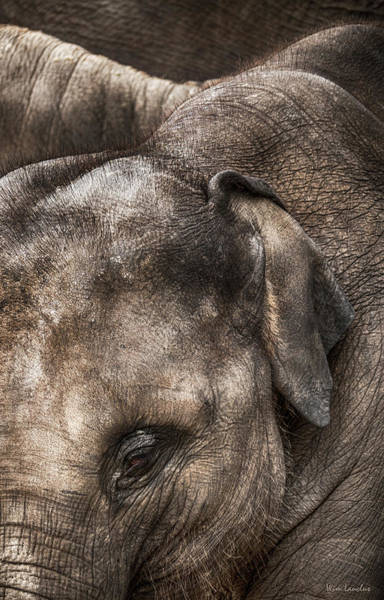 Photograph - Thick Skin by Wim Lanclus