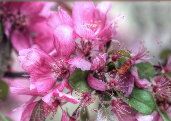 Photograph - Think Spring by Ree Reid