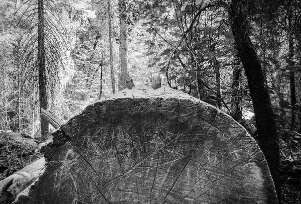 Photograph - Thinking Tree- by JD Mims