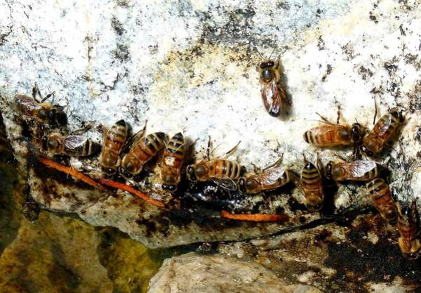 Wall Art - Photograph - Thirsty Honeybees by Will Borden