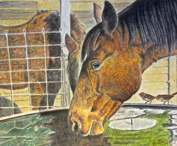 Drawing - Thirsty Horse by Bern Miller