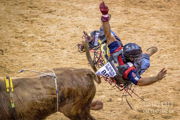 Prca Wall Art - Photograph - This Flight May Just Hurt by Rene Triay Photography