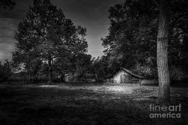 Horse Farm Photograph - This Is Your Day by Marvin Spates