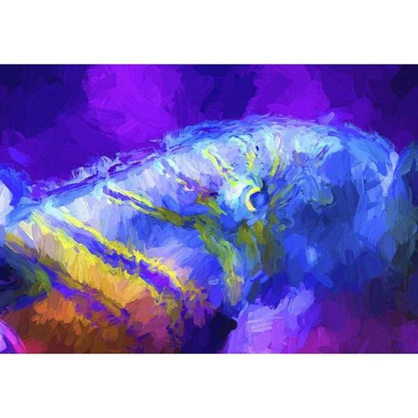 Brush Wall Art - Photograph - This Little Fishy Went To The Market by David Haskett II