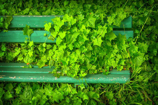 Leafy Greens Photograph - This Seat Is Taken by Garry Gay