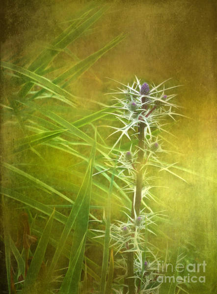 Inverary Castle Wall Art - Photograph - Thistle At Inverary by Judi Bagwell