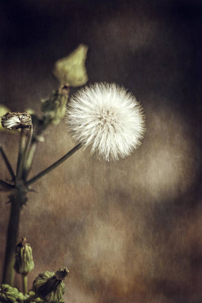 Photograph - Thistle by Carolyn Marshall