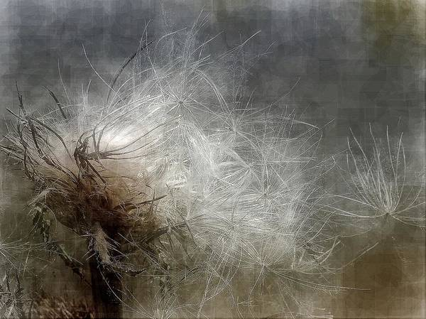 Digital Art - Thistle Seed by Ludwig Keck