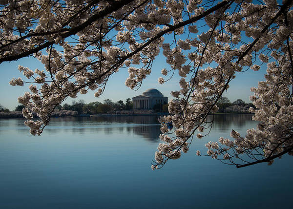 Wall Art - Photograph - Thomas Jefferson Monument With Cherry Blossoms by Gene Sizemore