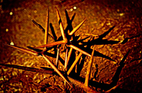 Photograph - Thorns Of Life by Louis Dallara
