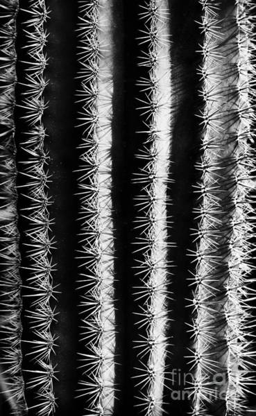 Wall Art - Photograph - Thorns by Tim Gainey