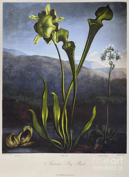 Wall Art - Photograph - Thornton: Bog Plants by Granger