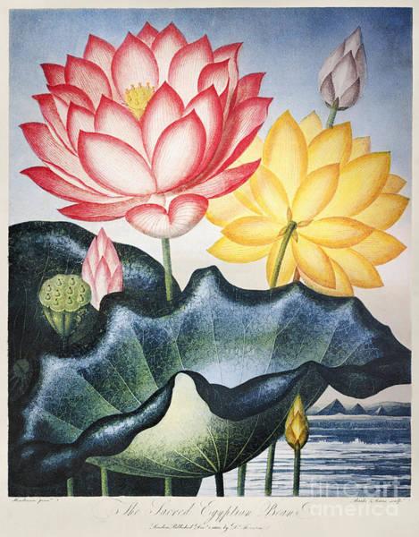 Wall Art - Photograph - Thornton: Lotus Flower by Granger