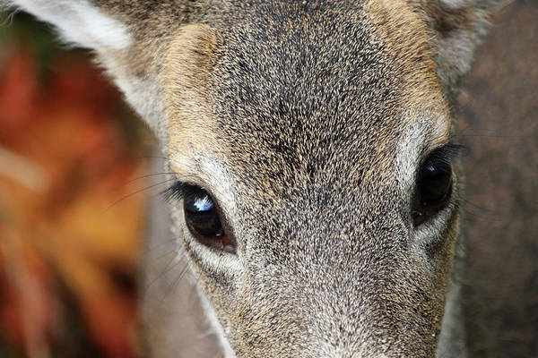 Photograph - Those Eyes by Peggy Collins