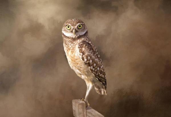 Wall Art - Photograph - Those Golden Eyes by Kim Hojnacki
