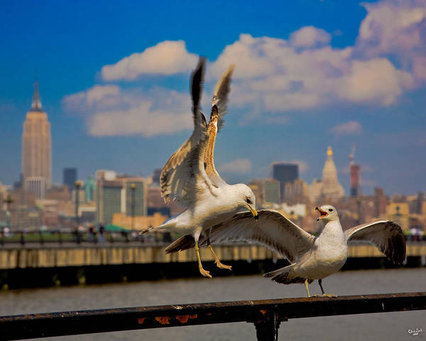 Photograph - Those Jersey Gulls  by Chris Lord