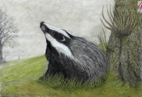 Woodland Animals Mixed Media - Thou Shalt Not Cull by Philip Harvey