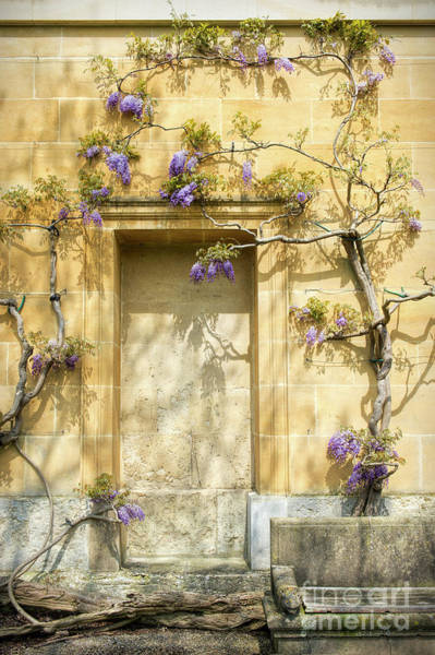 Wall Art - Photograph - Threads Of Wisteria by Tim Gainey