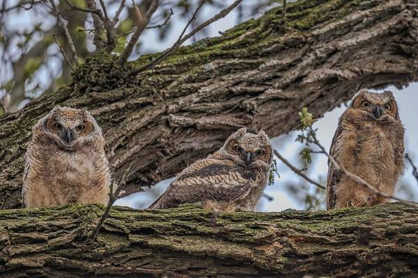 Photograph - Three Amigos by Paul Schultz