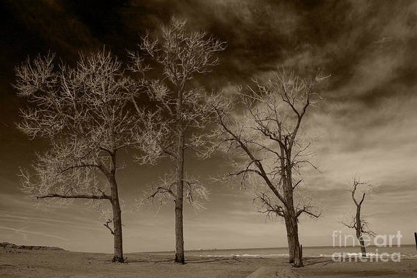 Wall Art - Photograph - Three And One by Timothy Johnson