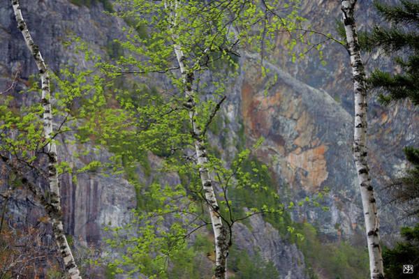 Photograph - Three Birches At Kineo by John Meader