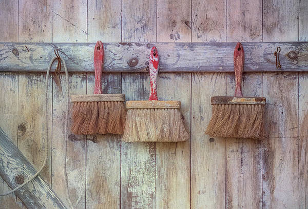 Photograph - Three Brushes by Tom Singleton