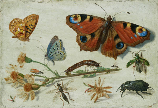 Wall Art - Painting - Three Butterflies, A Beetle And Other Insects by Jan van Kessel