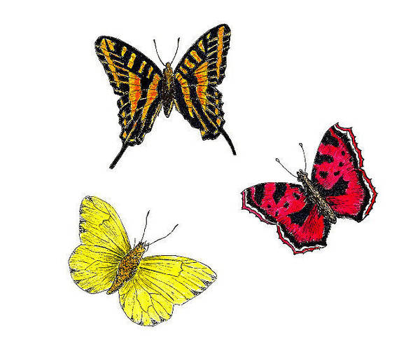 Wall Art - Painting - Three Butterflies by Michael Vigliotti
