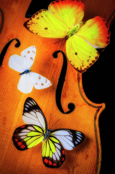 Photograph - Three Butterflies On A Violin by Garry Gay