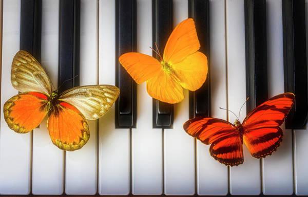 Wall Art - Photograph - Three Butterflies On Piano Keys by Garry Gay