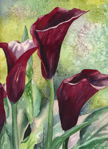 Painting - Three Callas by Anne Gifford