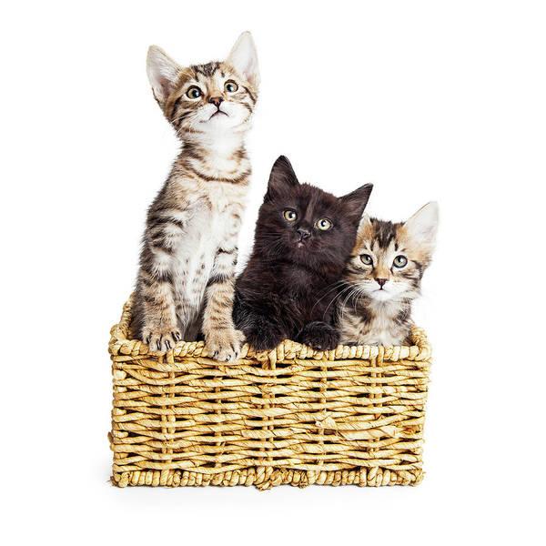 Photograph - Three Cute Kittens In Basket by Susan Schmitz