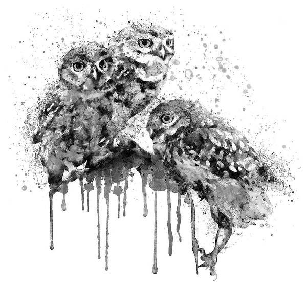Zoology Painting - Three Cute Owls Black And White by Marian Voicu