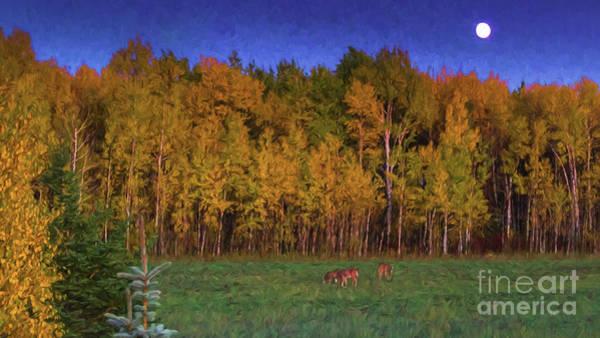 Three Deer And A Moon Art Print