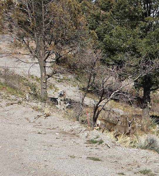 Photograph - Dry Mountain Slope With Three Deer by Karen J Shine