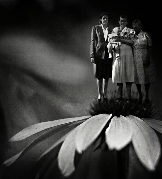 Photograph - Three Fairy Godmothers  by Rebecca Sherman