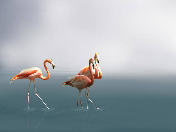Phoenicopterus Roseus Wall Art - Photograph - Three Flamigos by Art Spectrum