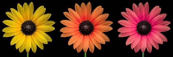 Cute Photograph - Three Flowers by Hudson Marsh