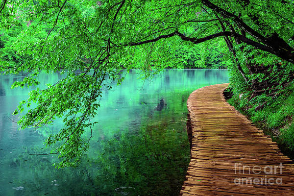 Photograph - Tree Hanging Over Turquoise Lakes, Plitvice Lakes National Park, Croatia by Global Light Photography - Nicole Leffer