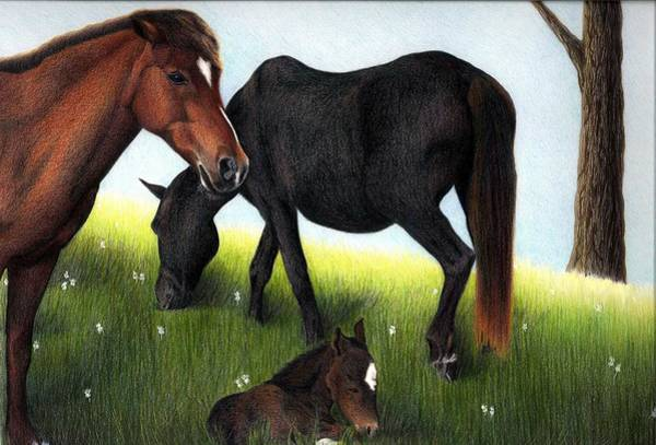 Drawing - Three Horses by Danielle R T Haney