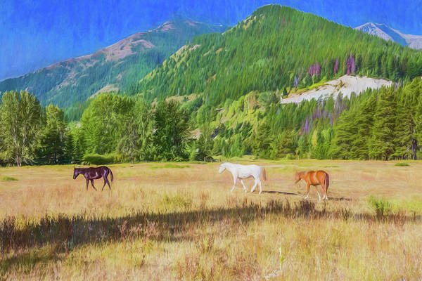 Photograph - Three Horses In A Pasture With Elk Mountain In  The Background.  by Rusty R Smith