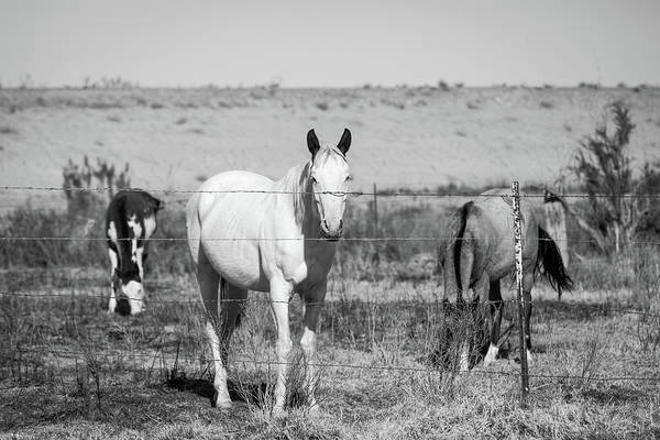 Photograph - Three Horses Through Fence by SR Green