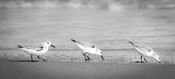 Photograph - Three Hungry Little Guys by T Brian Jones
