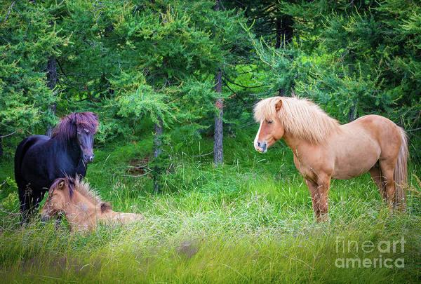 Photograph - Three Icelandic Horses by Inge Johnsson